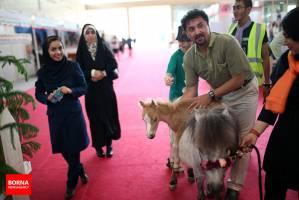 گزارشی از نمایشگاه اسب و حیوانات همزیست در شهرآفتاب